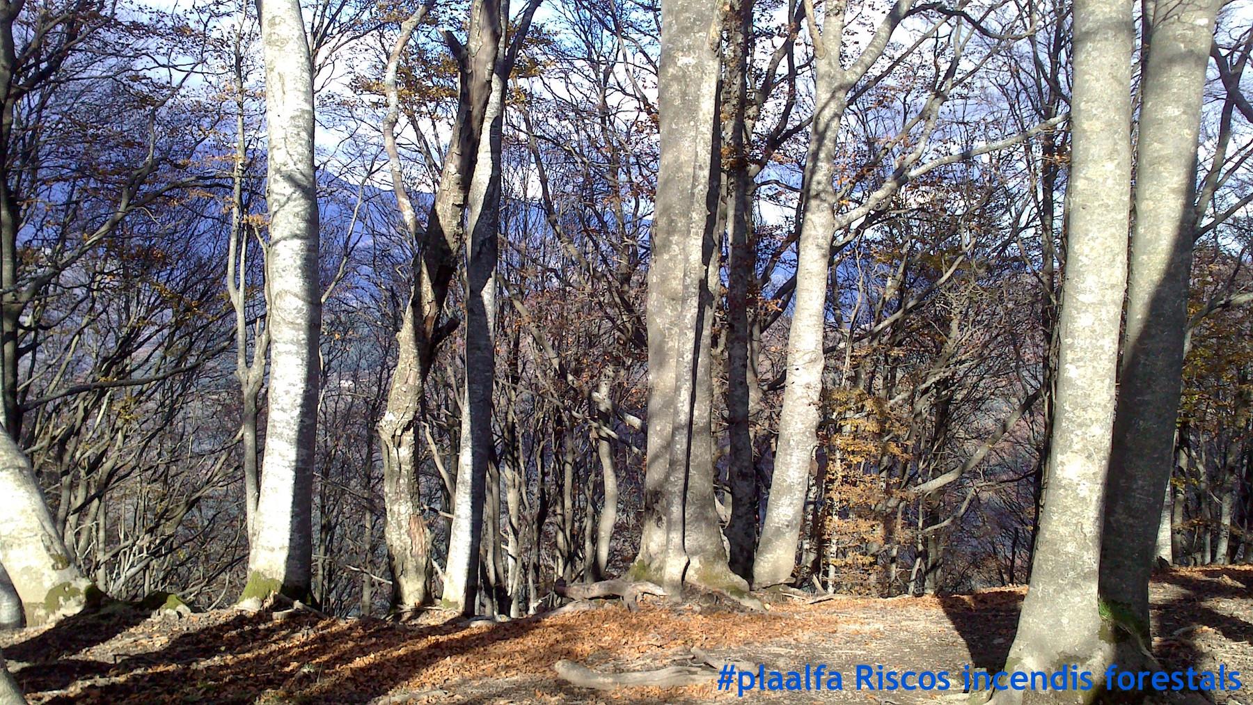 Alfa-incendi-forestal